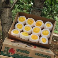 北京平谷黄油桃澳油5斤*1盒(现采摘现发货)